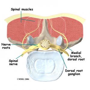 Spinal Facet Joints Low Back Pain