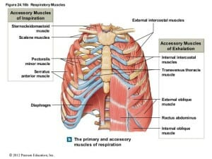 Apical Breathing Burnaby Physio